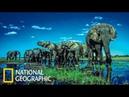Nat Geo Этоша – дикая пустыня Африки. Документальный фильм