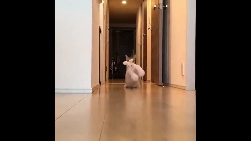 Котик несет игрушку