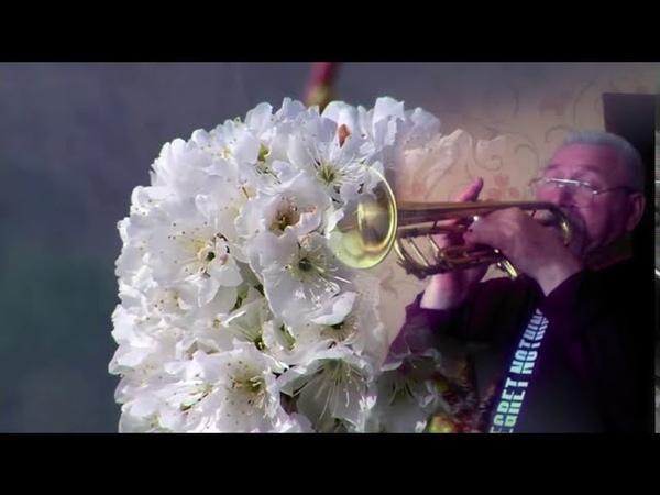 Д.Луиджи - Вишнёвый сад, соло на трубе Сергей Гершенович
