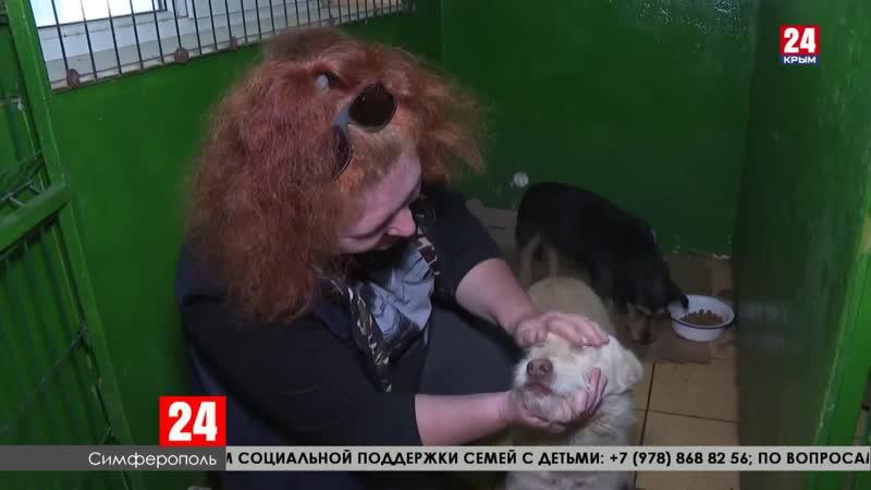 В Симферополе агрессивная безнадзорная собака покусала женщину
