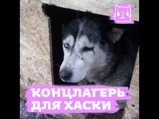 Издевательство над собаками в московском Хаски-парке