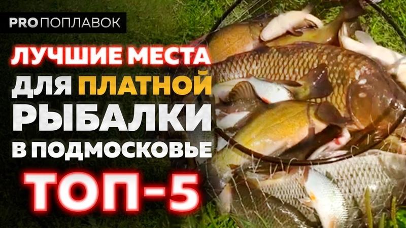 Платная рыбалка в Подмосковье 2020 Лучшие места в Московской области по версии Юрия Радугина
