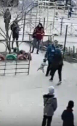 В Севастополе школьник выгуливал собаку на детской площадке Это возмутило проходящую мимо пенсионерку. Она схватила пса за поводок, от чего тот начал задыхаться. Подросток набросился на