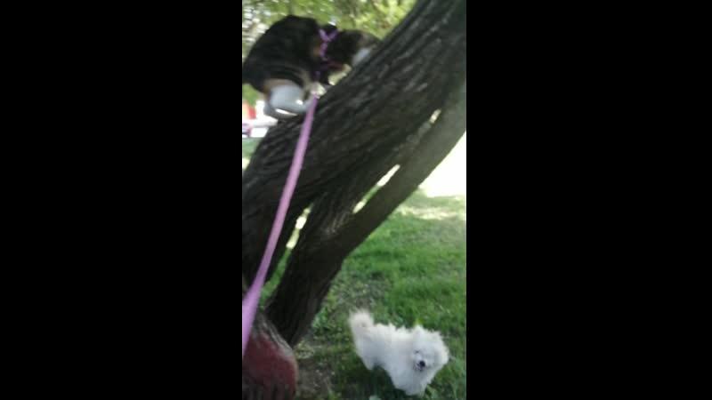 Бастет и пес