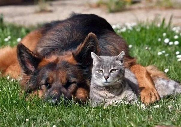 - Что не так с этим миром, Кот - Пёс поднял голову со своих вытянутых лап и посмотрел на своего друга Кот вздрогнул и открыл уже закрывающиеся глаза. Оглянувшись по сторонам, он непонимающим