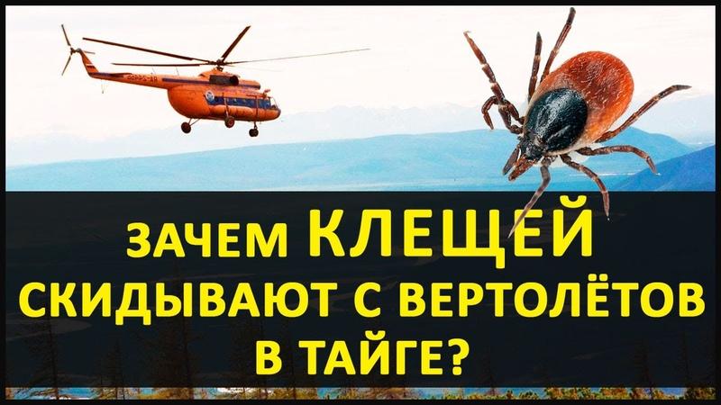 Энцефалитных Клещей скидывают с вертолётов! Кто и зачем устраивает диверсии И не только это! Ужас.