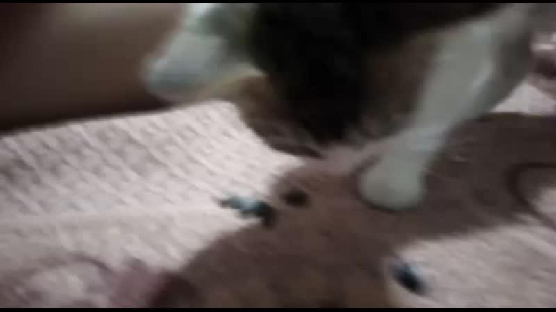 Кошка Симка любит щёлкать семечки 😆😅