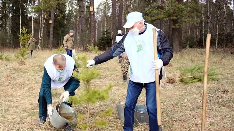 В России и странах СНГ высадили миллионы деревьев в рамках акции Сады памяти