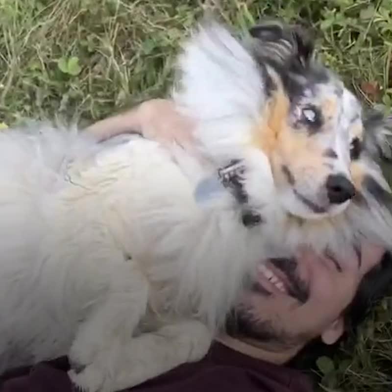 Собака не узнала хозяина спустя полгода