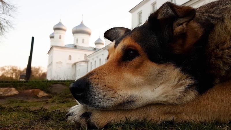 Полторы минуты из жизни монастырской собаки