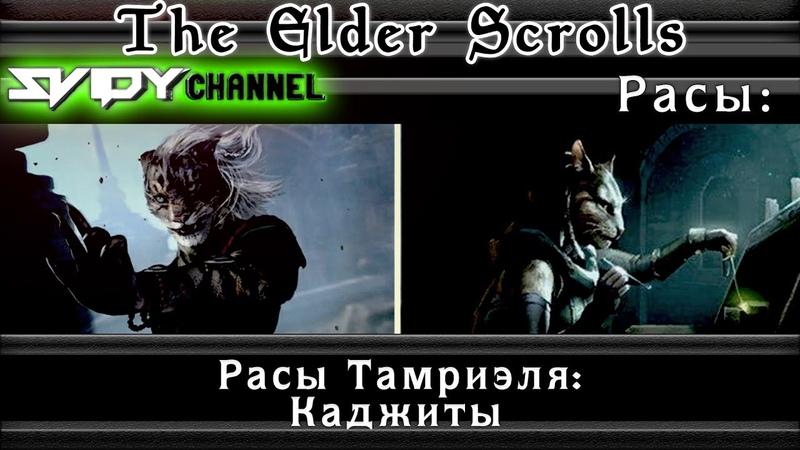 The Elder Scrolls Расы Тамриэля Каджиты Лор