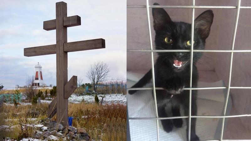 Эту Кошку Нашли Привязанной к Кресту на Кладбище То Что Случилось Дальше Убивает Веру в Человечеств
