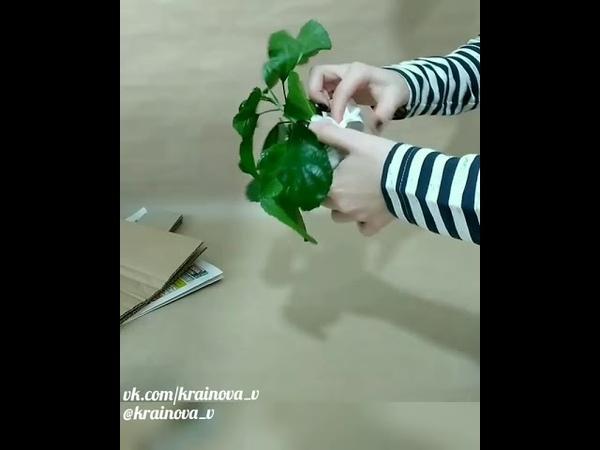 Как я пакую растения почтой