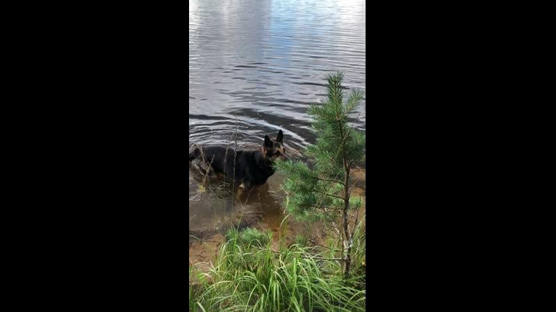 озеро болотное