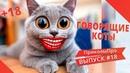 Приколы про кошек с озвучкой 2020 Приколы с котами до слез Выпуск 18