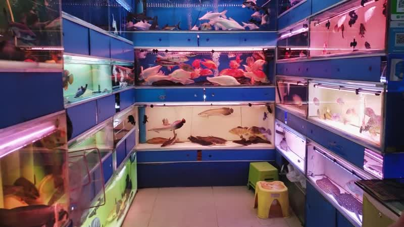 China Aquarium Fish Market CRAZY MeFIvz1yfw 1080p