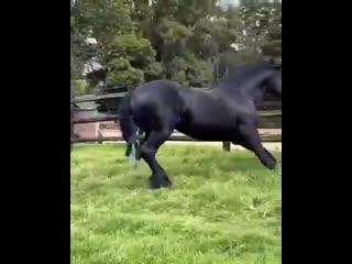 Смотри пёс, как надо красиво бегать