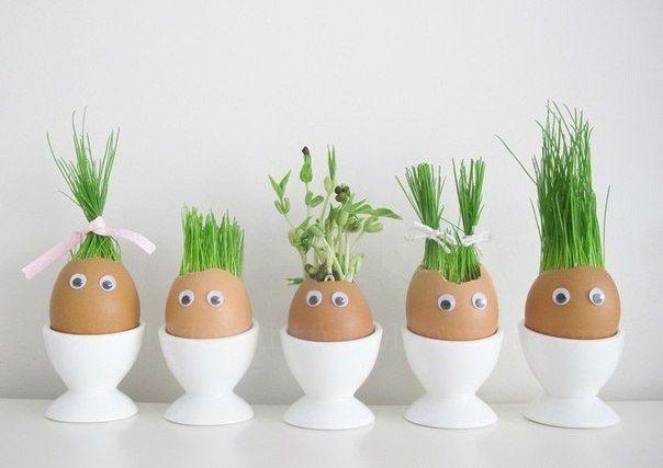 А вы уже вырастили таких смешных человечков ) Огород в яичных скорлупках. Отличный эксперимент для ребёнка!Вам потребуется:- яичная скорлупа- вата- семена (подойдут любые: травы, любых злаковых