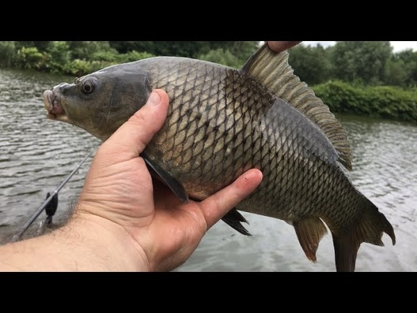 Рыбалка на сазана и карпа Попал на ЖОР Рыбалка на кормачки