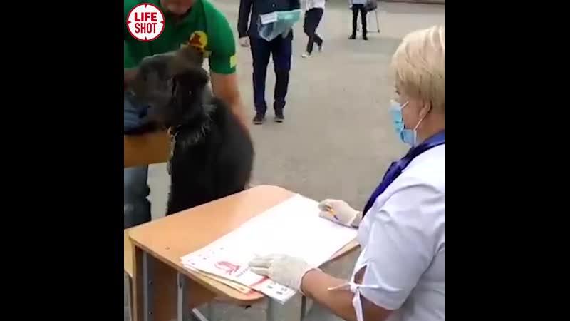 Медвежонок на голосовании