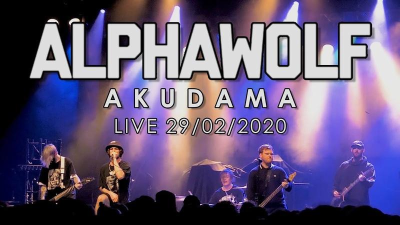 Alpha Wolf Akudama ☆NEW SONG☆ Live 29 02 2020