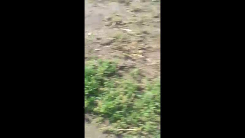 Warrior Spirit Akira Акира 25 02 2020г г Барнаул Vart Imperbul Siberian Star Jumper Buteo Dum Spiro АСТ стафф а