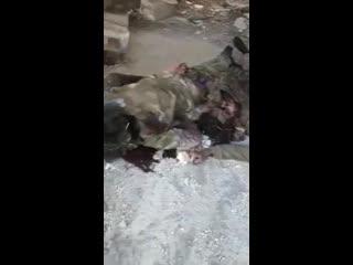 18+ Предупреждение: видео содержит изображение мертвых тел с серьезными увечьями. Это последствия удара по укреплению Хезболлы