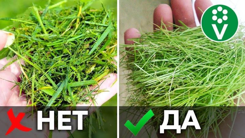 5 НЕТ ПРИ МУЛЬЧИРОВАНИИ ТРАВОЙ Используйте скошенную траву правильно для повышения плодородия