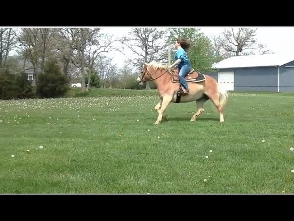 Ponyboy Winnie walk trot canter riding video