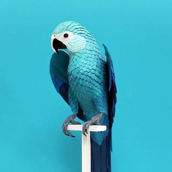 Диана Бельтран Эррера художница из Колумбии, которая обожает птиц с младенческого возраста Всего несколько лет назад эта любовь привела ее к созданию потрясающих изделий из бумаги, которые