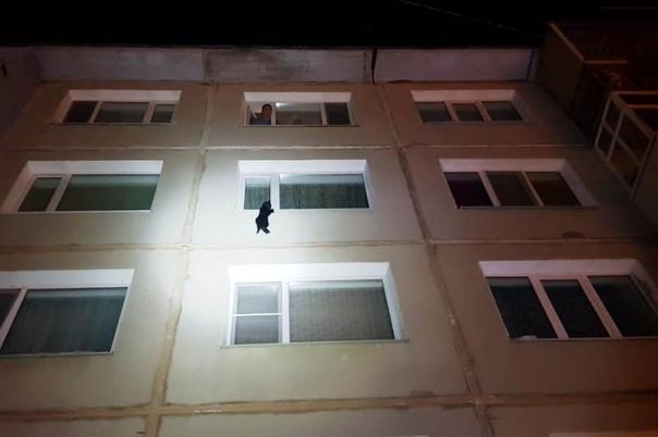 А теперь к действительно важным новостям! В Магадане спасли котика! На окне одного из домов люди заметили кота, который в 30-градусный мороз висел на одной лапке. Оказалось, что его пьяная