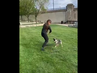 Какая работа с собаками за 13 секунд!! Фантастично!