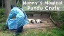 Everyone Wants To Own A Magical Panda Crate! | iPanda