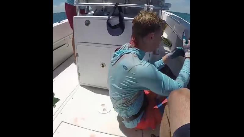 Акула укусила за голову подводного охотника