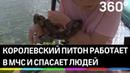 Как змея помогает спасать людей. В поисково-спасательном отряде живёт питон уже 8 лет