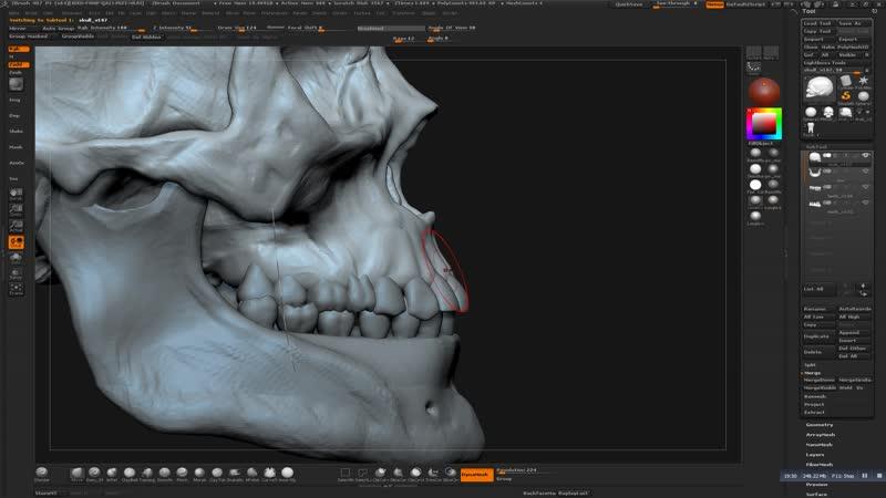 06_human_skull_teeth_placement