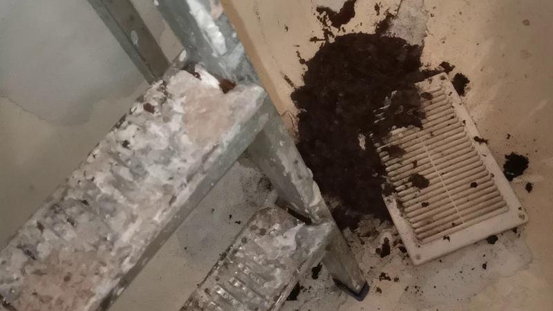 Что скрывается вентиляции 5ти этажном доме Лежало болеше 20 лет в ванне Ventilation 1 кг Жесть Смех!