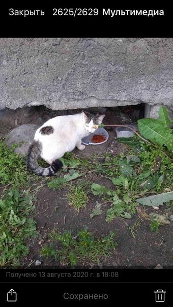 вязания спасите кошек картинка тебе спокойствия