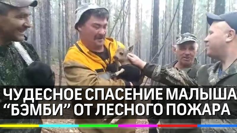 Бурятский Бэмби чудесное спасение оленёнка от лесного пожара