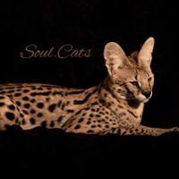 Soul Cats