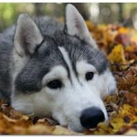 Фотография профиля Aman Korkembaev ВКонтакте