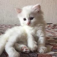 Фото профиля Маши Петченко