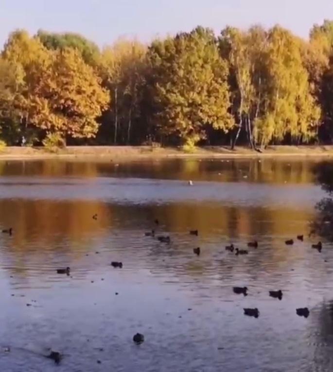 Самые закаленные москвичи продолжают купаться на востоке Москвы.