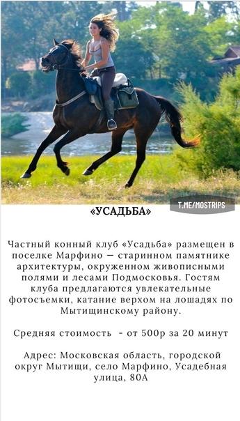 ТОП-6 подмосковынх мест, где покататься на лошади:...
