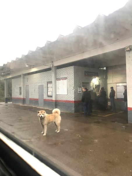 На станции Соколовская 8:30 утра чей-то дружок. Чу...