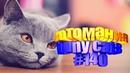 Смешные коты Приколы с котами Видео про котов Котомания 140
