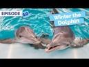 When Winter Met Hope - Winter the Dolphin: Saving Winter - Episode 10