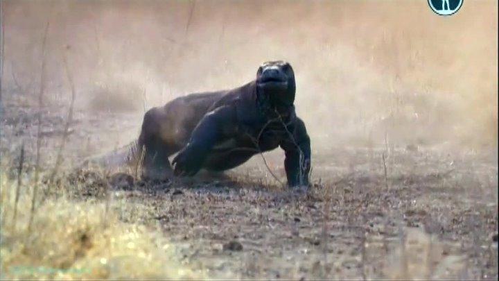 BBC Жизнь на планете Земля Земноводные и рептилии Документальный животные 2009