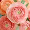 ©Paper FLOWERS Club (Свит-дизайн)