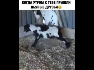 Когда утром к тебе пришли твои пьяные друзья